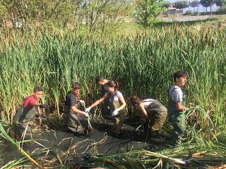 Netejant la bassa