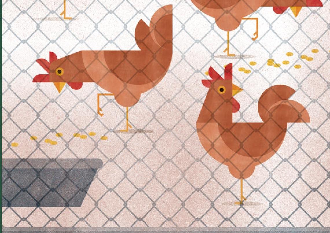 Guia  per a la cria d'aus per autoconsum