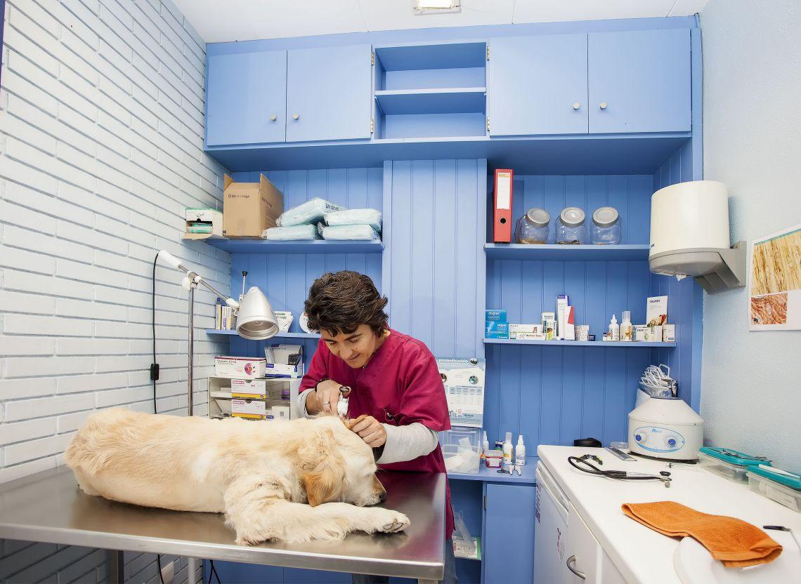 Consultori veterinari l'Esquirol